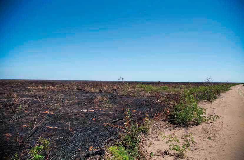 El Cerrado es uno de los biomas más biodiversos de la Tierra. Sin embargo, el establecimiento de grandes plantaciones de soja no deja más que destrucción. Rosilene Miliotti/FASE